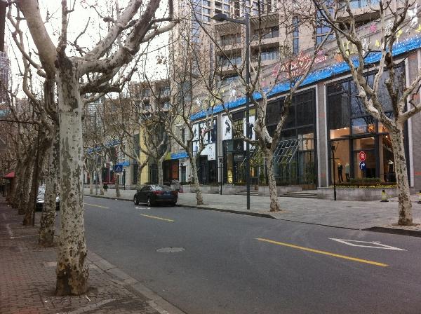 上海新天地上的梧桐樹